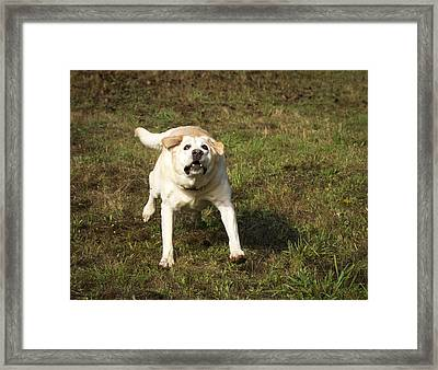 Looking Up Framed Print by Jean Noren