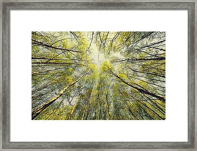 Looking Up Framed Print by Svetlana Sewell