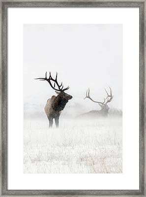 Lost In The Storm Framed Print