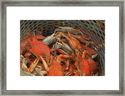 Louisiana Boiled Crabs Framed Print