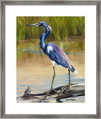Louisiana Heron Framed Print by Phyllis Beiser