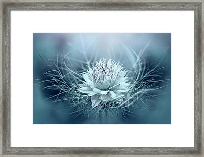 Love-in-a-mist Framed Print