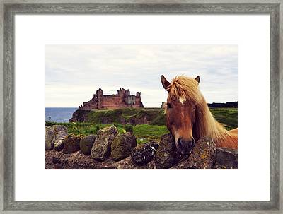 Lovely Horse And Tantallon Castle Framed Print