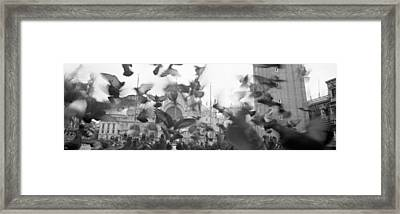 Low Angle View Of A Flock Of Pigeons Framed Print