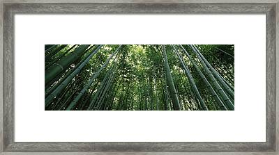 Low Angle View Of Bamboo Trees Framed Print by Panoramic Images