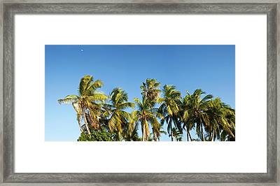 Low Angle View Of Palm Trees Framed Print