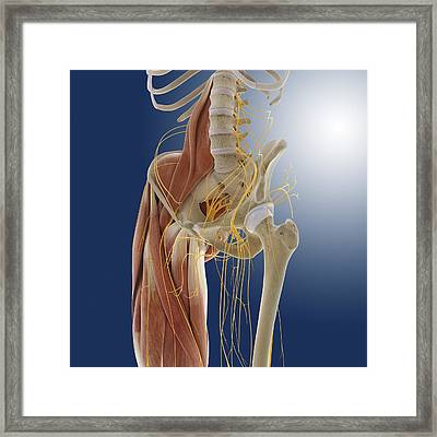 Lower Body Anatomy, Artwork Framed Print