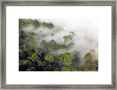 Lowland Rainforest Framed Print by Alex Hyde
