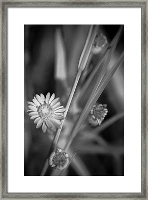 Loxahatchee Flower Framed Print by Bradley R Youngberg