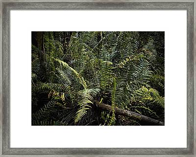 Loxahatchee Refuge-4 Framed Print by Rudy Umans