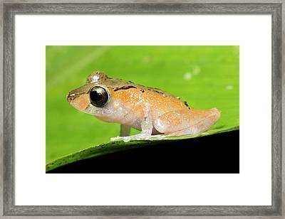 Luscombe's Rain Frog Framed Print