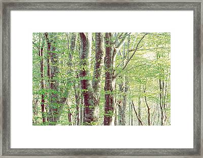 Lush Forest Framed Print by Panoramic Images
