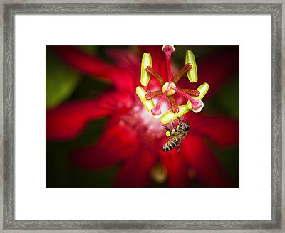 Framed Print featuring the photograph Macro Photograph Of A Bee Collecting Pollen. by Zoe Ferrie