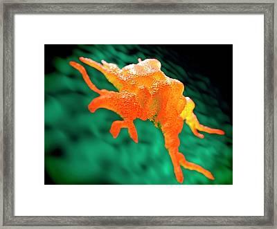 Macrophage Framed Print by Science Artwork