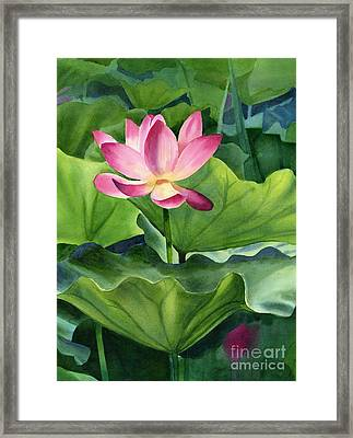 Magenta Lotus Blossom Framed Print by Sharon Freeman