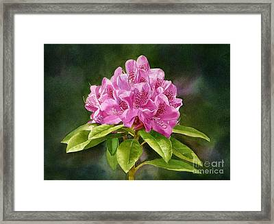 Magenta Rhododendron With Background Framed Print