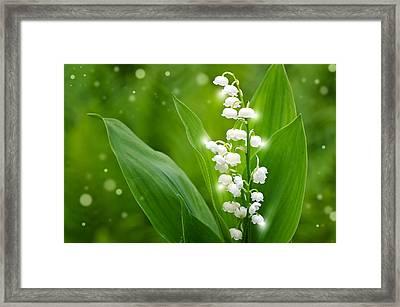 Magic Mai Framed Print by Steffen Gierok