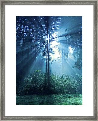 Magical Light Framed Print by Daniel Csoka