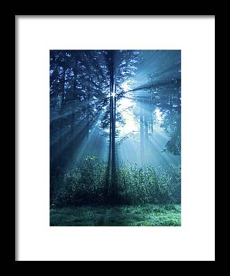 Forest Framed Prints