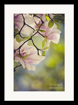 Longevity Framed Prints