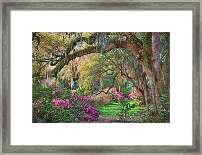 Magnolia Plantation Azaleas Framed Print