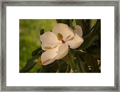 Magnolia Framed Print by Rima Biswas