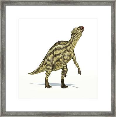 Maiasaura Dinosaur Framed Print