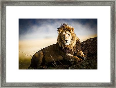 Majestic Male On Mound Framed Print