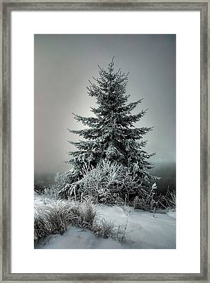 Majestic Winter Framed Print by Heather  Rivet