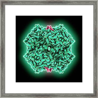 Malaria Drug Bound To Enzyme Framed Print