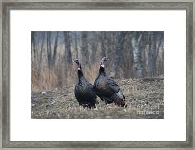 Male Eastern Wild Turkeys Framed Print by Linda Freshwaters Arndt