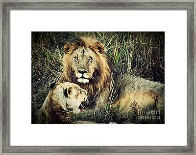 Male Lion And Female Lion. Safari In Serengeti. Tanzania. Africa Framed Print