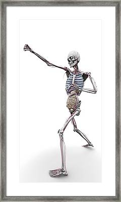 Male Skeleton And Organs, Artwork Framed Print by Science Photo Library