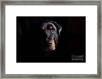 Mandy Framed Print by Cindy Manero