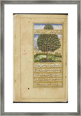 Mango Tree Framed Print by British Library