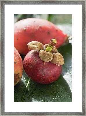 Mangosteen And Prickly Pears On Leaf Framed Print