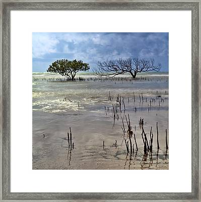 Mangrove Tree In Blurred Sea Framed Print by Dirk Ercken
