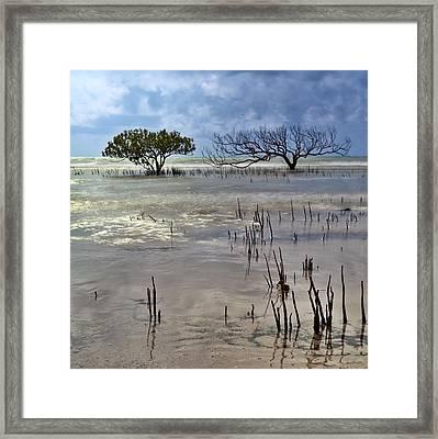 Mangrove Tree In Blurred Sea Framed Print by Dirk Ercken