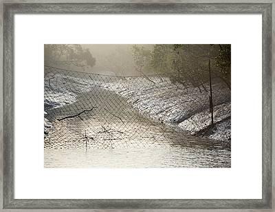 Mangroves In The Sunderbans Framed Print by Ashley Cooper