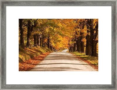 Maple Tree Canopy Framed Print