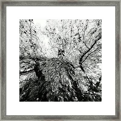 Maple Tree Inkblot Framed Print