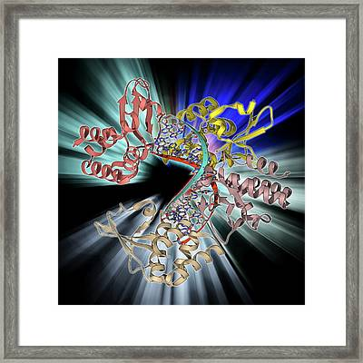 Marburg Viral Protein 35 And Rna Framed Print by Laguna Design