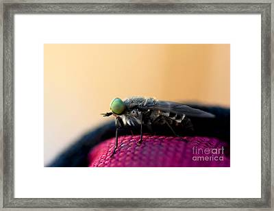 March Fly Macro Framed Print by Jorgo Photography - Wall Art Gallery