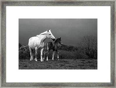 Mare And Foal, Co Derry, Ireland Framed Print