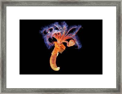 Marine Worm Framed Print