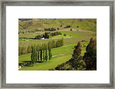 Marlborough Golf Club, Vineyard Framed Print by David Wall