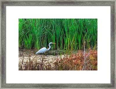 Marsh Hunter Framed Print by Scott Hansen