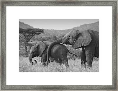 Maternal Love Framed Print