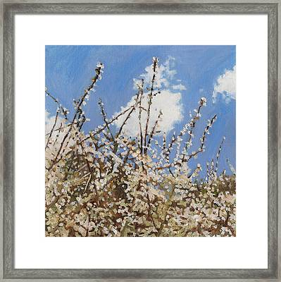 Mayflower Framed Print by Helen White