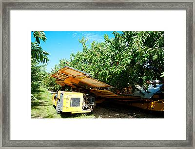 Mechanical Harvester Shaking Cherry Framed Print by Panoramic Images
